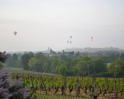 Domaine viticole - Domaine des Perelles - Mâcon