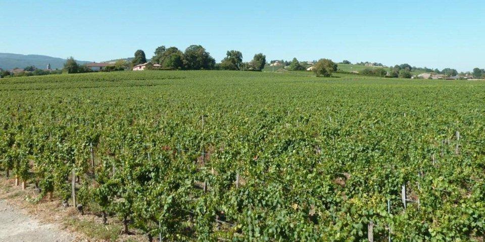 Un séjour unique au cœur des vignes